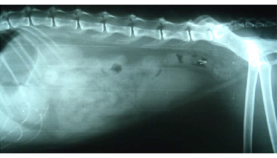 04-08-2011 x-ray pic