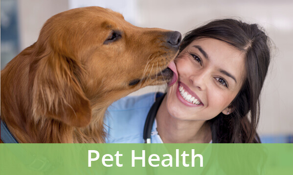 why become a veterinarian